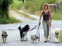 Setting up a dog walking business