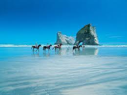 beach rides pakiri