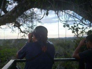 Ballou Marco birding kapok tree