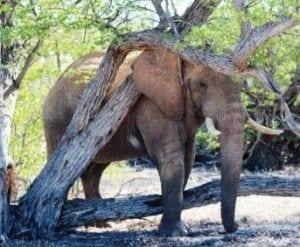 sandra elephant