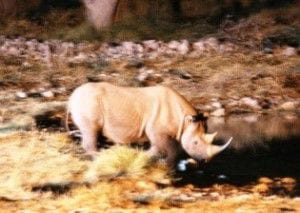 sandra rhino