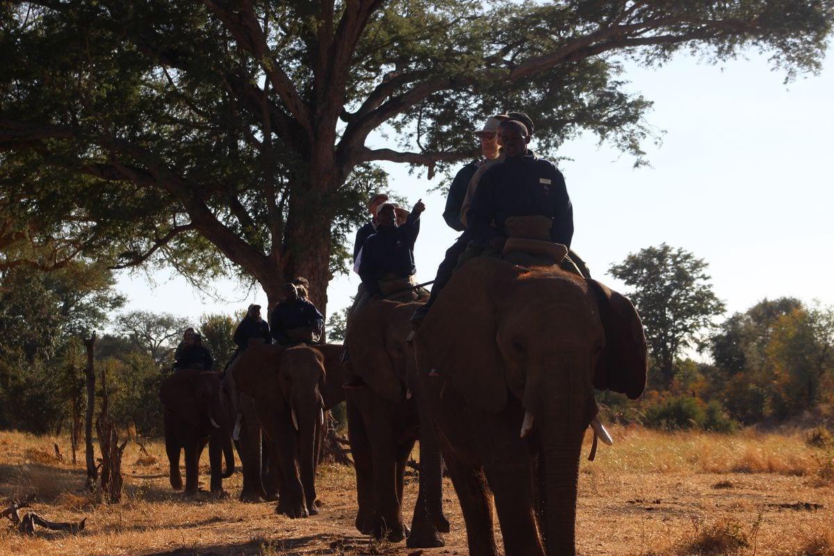 ellies on safari web