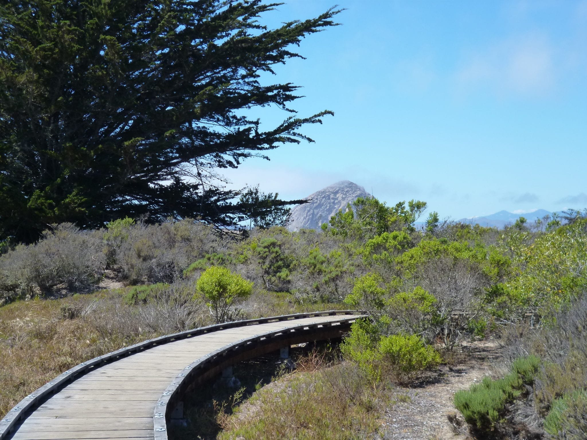 boardwalk at edge of estuary morro bay