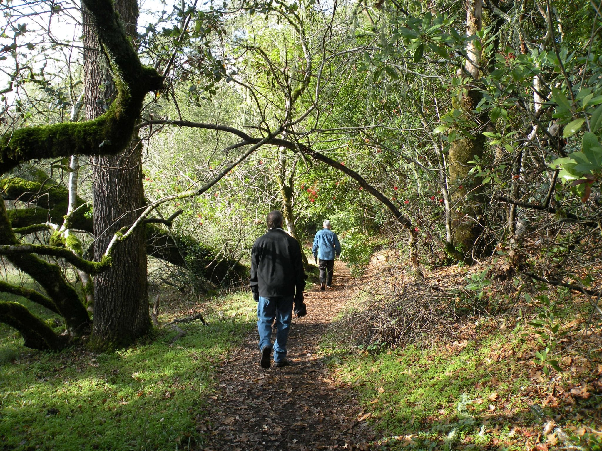 Hikers on trail at JLH