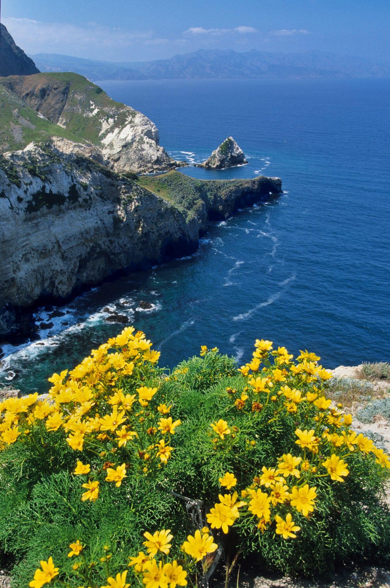 Wildflowers SantaCruz Island