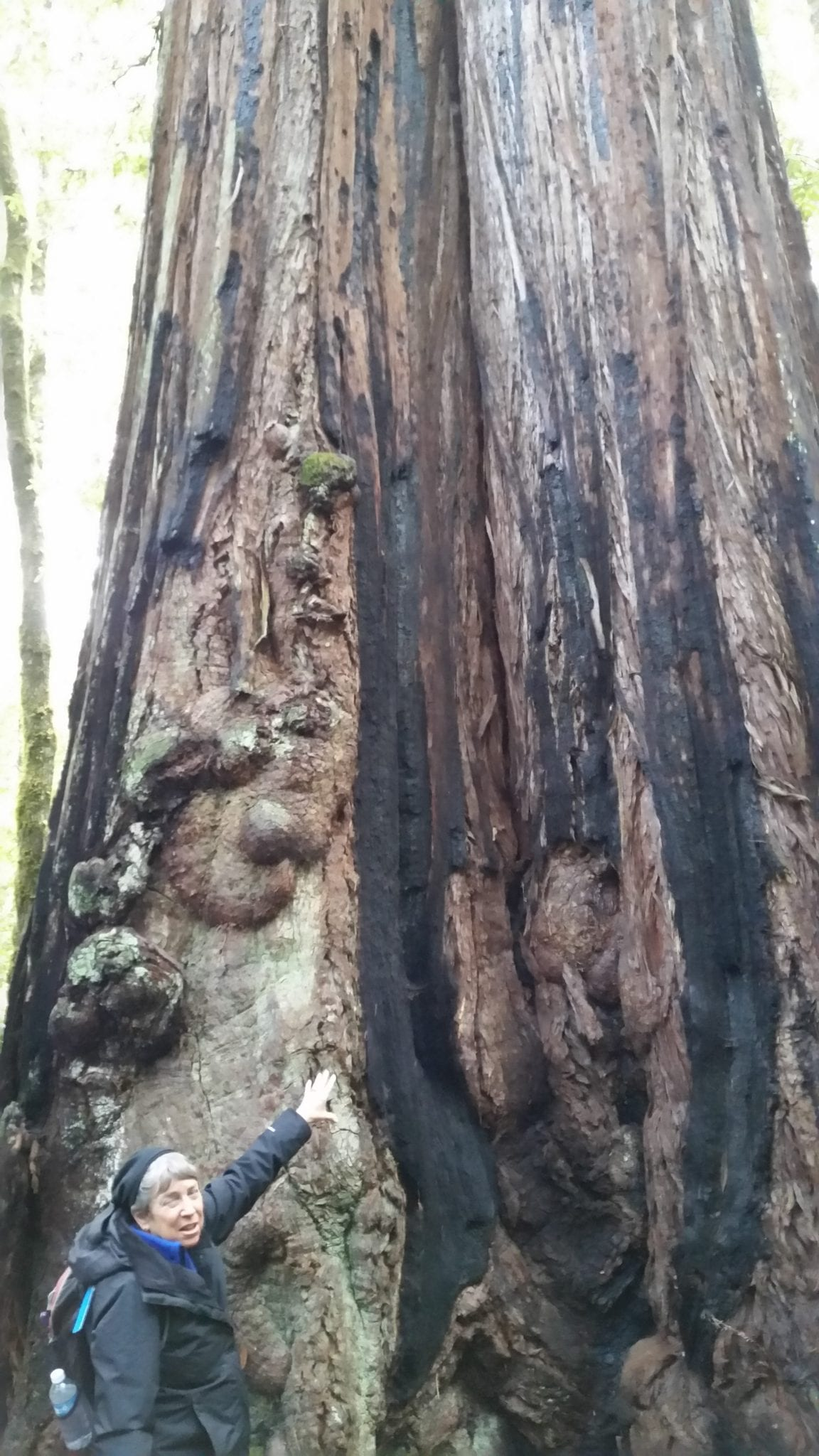 Linda and big redwood tree