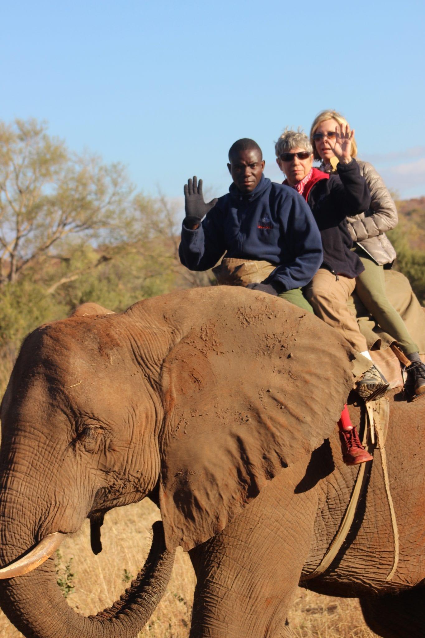 Int. Africa Elephant Safari