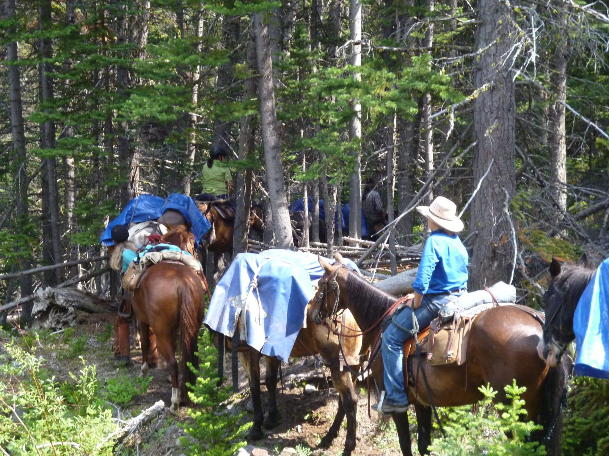 Int. Horsepack trip B.C.