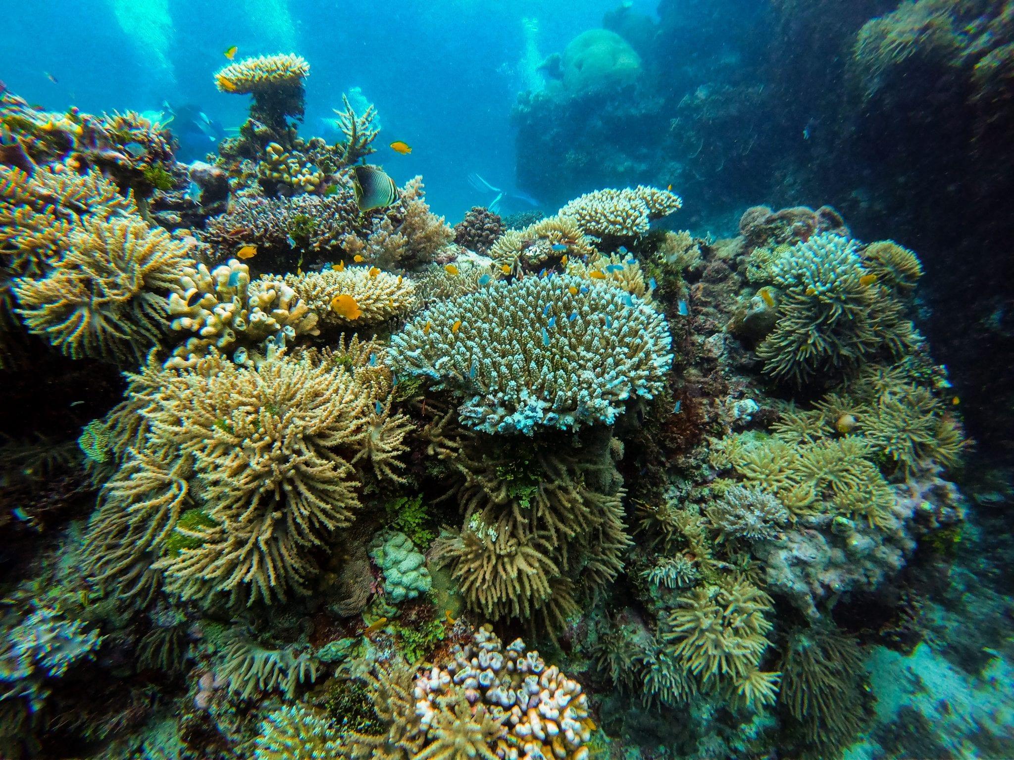 Great Barrier Reef Daniel-Pelaez-Duque--unsplash