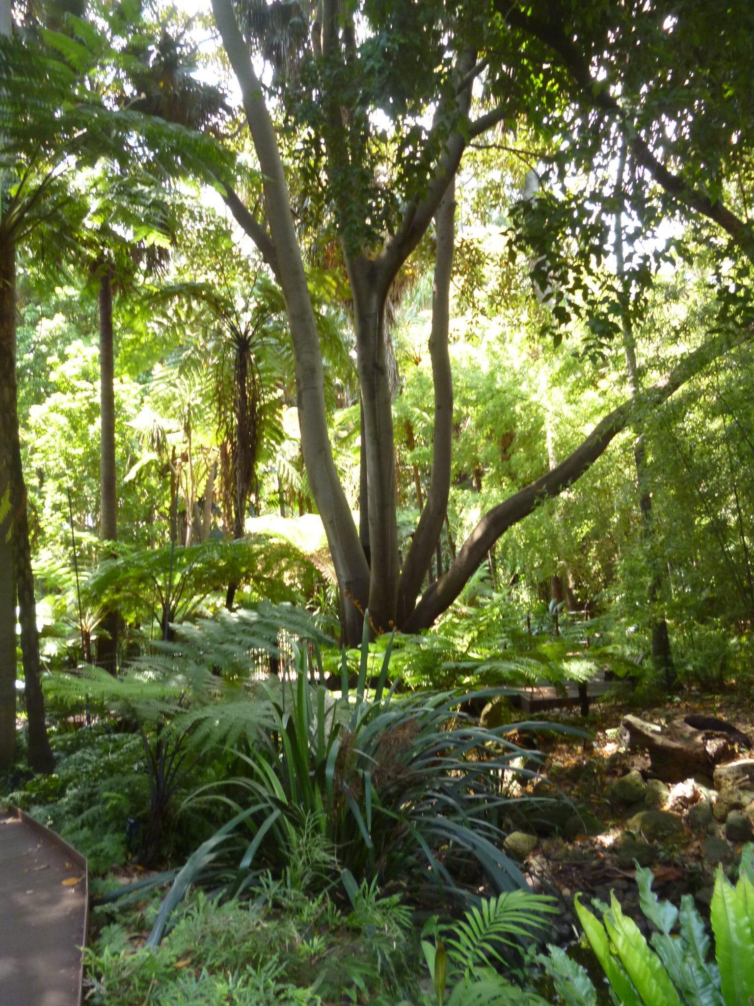 Melbourne Royal Botanic GardenP1040650
