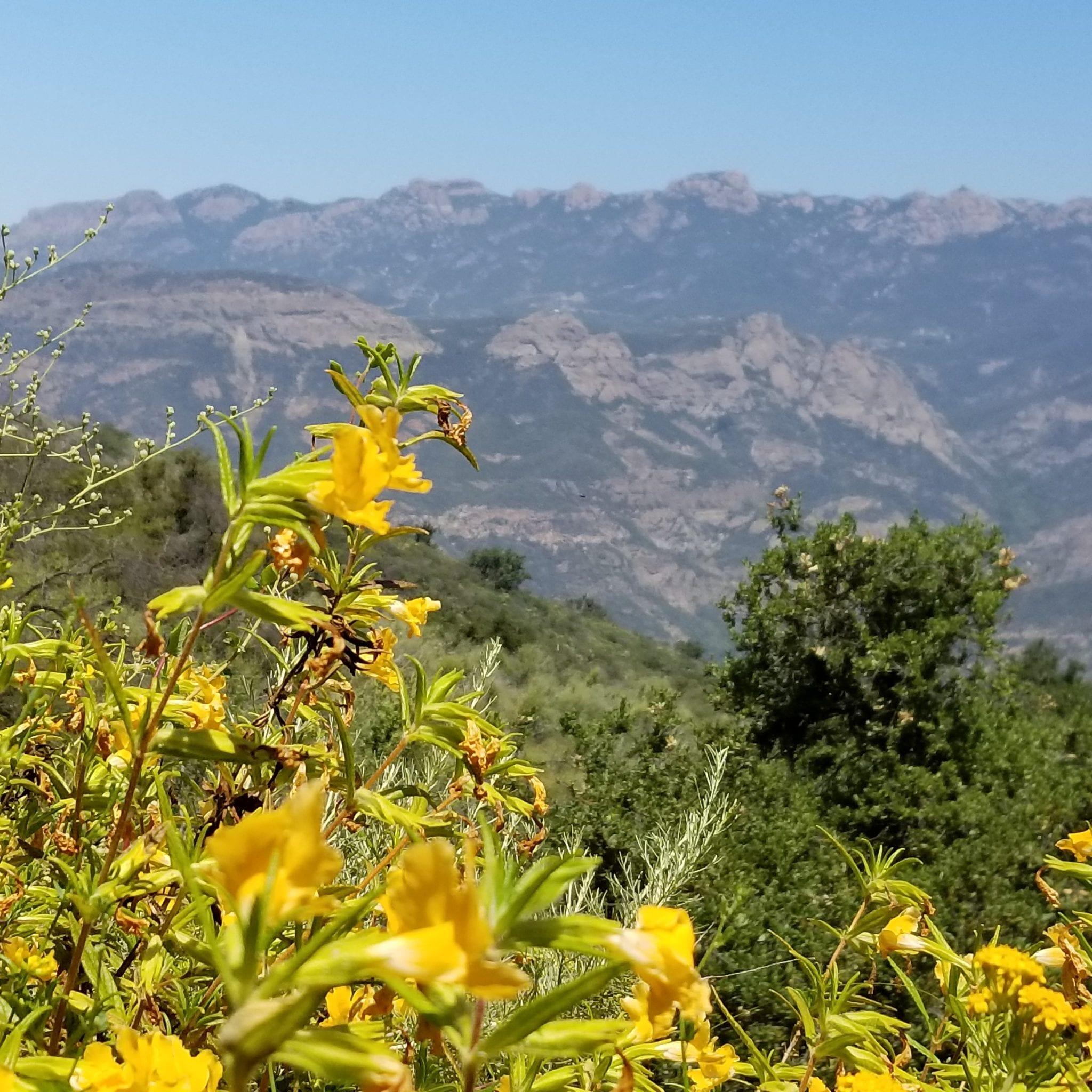 Carlyse Canyon