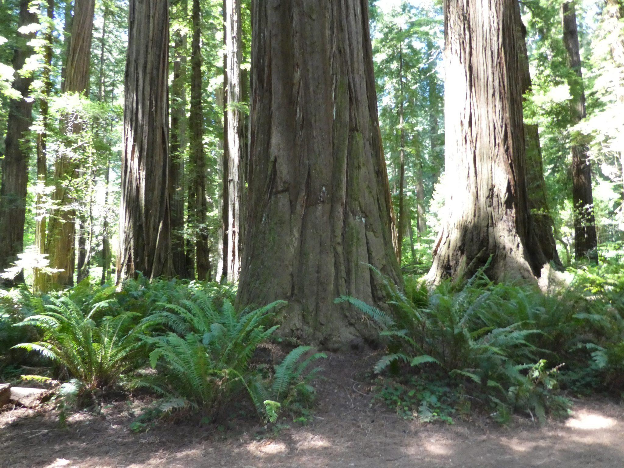Stout Grove ferns